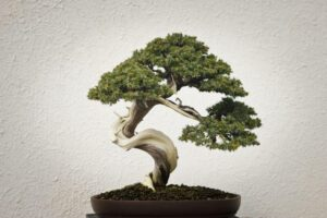 Grow slowly, grow wisely